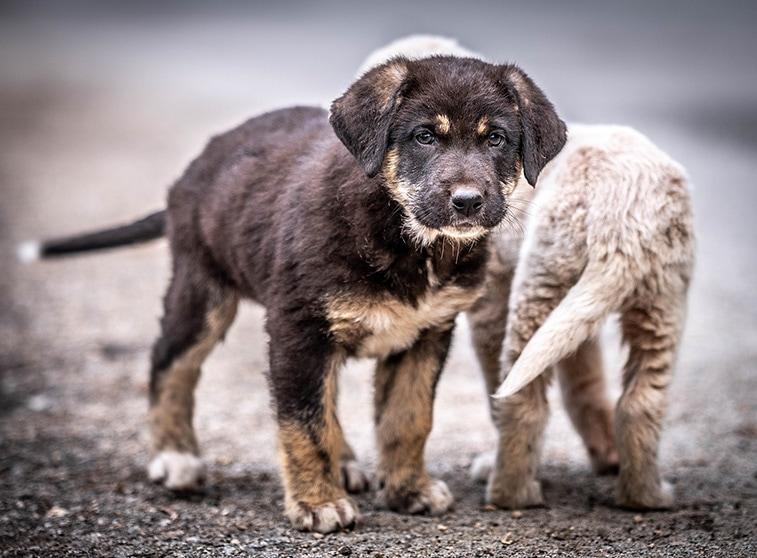 kastration hund alter