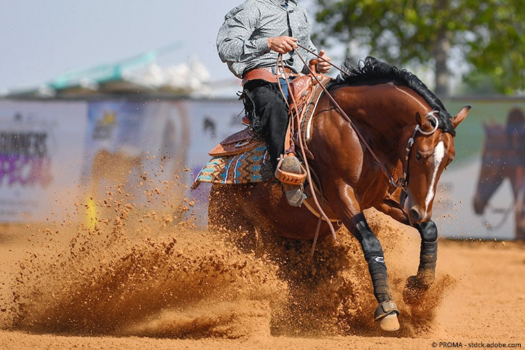 westernpferde