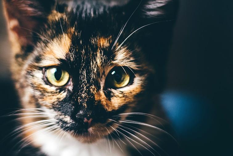 geschlecht katze