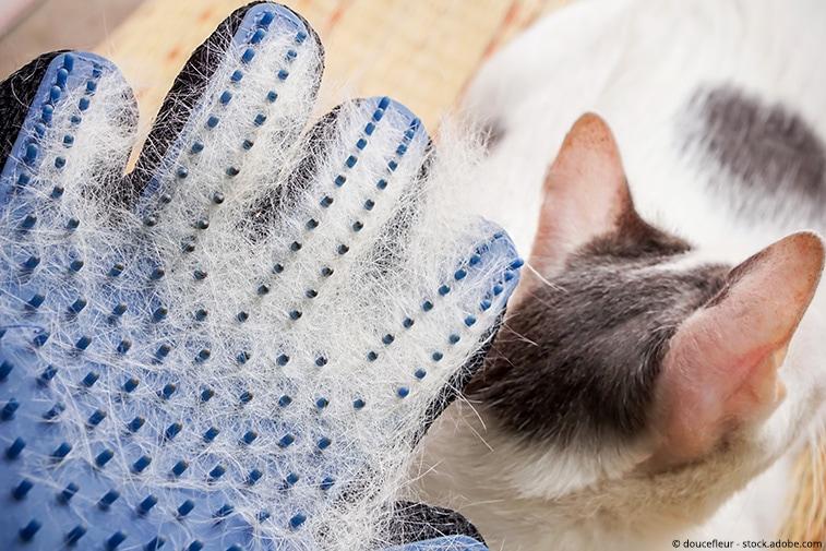 katzenbürste handschuh