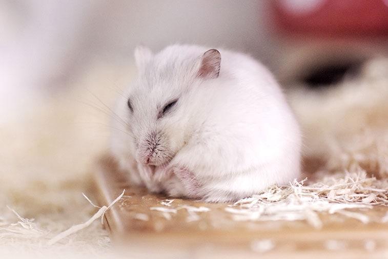 artgerechte haltung hamster