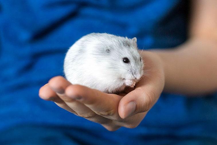 hamster haltung käfig