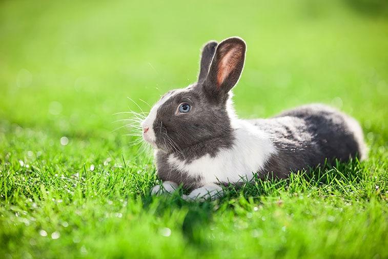 Haustiere Fur Allergiker Ratgeber Rund Um Haustiere Und Allergien