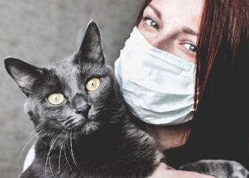Minischwein Als Haustier Halten Ratgeber Haltung Rassen Gesundheit